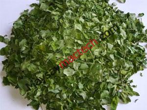 Tác dụng của chùm ngây khô, một loại lá giàu chất dinh dưỡng