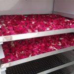 Máy sấy khô hoa tươi, sấy hoa hồng, hoa nhài, hoa cúc…làm trà, nước tắm