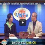 Tìm hiểu nấm linh chi và cách sử dụng nấm theo BS Nguyễn Đăng Khoa