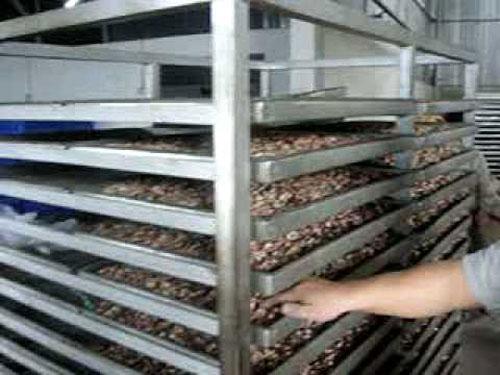 Làm hạt điều sấy khô số lượng lớn