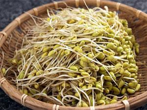 Mầm đậu nành sấy khô xay bột, đồ uống chống lão hóa