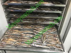 Máy sấy cá khô sấy khô số lượng lớn, hãng sản xuất Mactech Việt Nam
