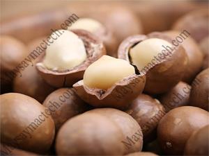 Phân phối hạt macca tây nguyên, đặc sản vùng Tây Nguyên, Việt Nam