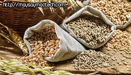Không chỉ ớt khô, nhiều loại thực phẩm khác cũng có thể nhiễmaflatoxin