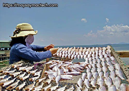 Cách phơi cá khô không cần dùng máy sấy