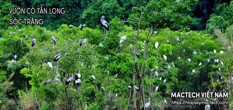 Vườn cò Tân Long - Sóc Trăng