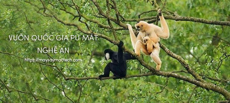 Vườn quốc gia Pù Mát - Nghệ An