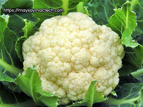 7 Lợi ích của bông cải trắng - súp lơ trắng đối với sức khỏe
