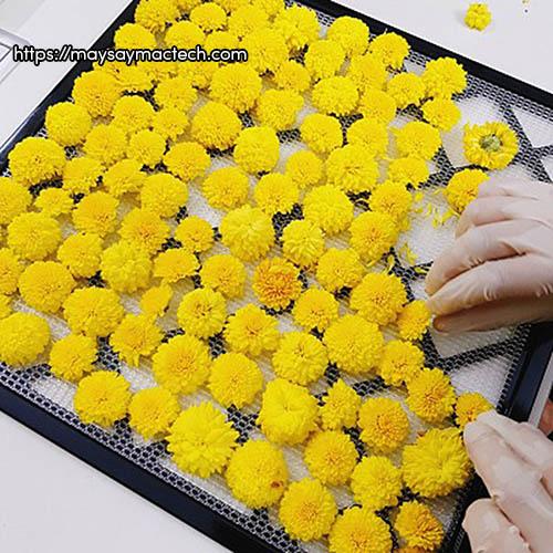 Hướng dẫn cách làm trà hoa cúc tại nhà cực kỳ đơn giản