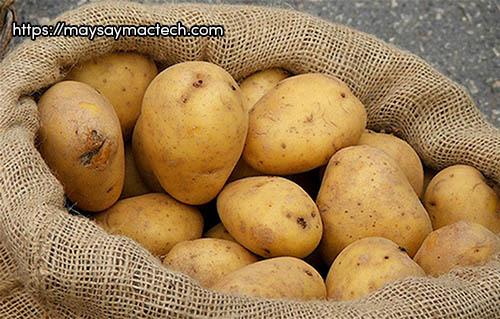 Tác hại của khoai tây - ăn nhiều khoai tây không tốt chút nào