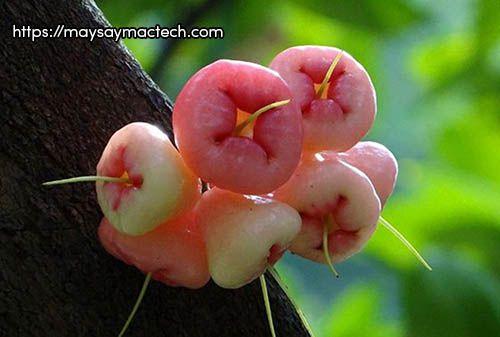 Ăn nhiều quả roi có tốt không? Tác hại của quả roi là gì?