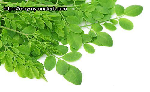 Lợi ích của rau chùm ngây, liệu có chữa được bách bệnh