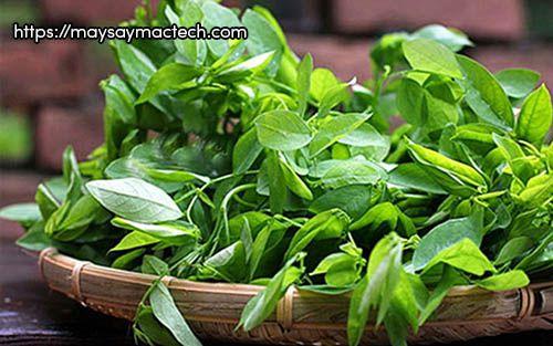 Lợi ích tuyệt vời của rau ngót dành cho sức khỏe của bạn