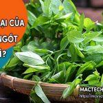 Tác hại của rau ngót, những điều cần chú ý khi ăn rau ngót