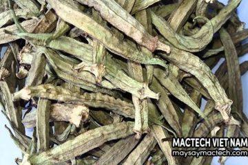 Công dụng của đậu bắp sấy khô có thể bạn chưa biết