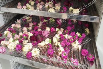 Cách sấy hoa hồng khô phù hợp với nhiều yêu cầu, nên tham khảo