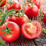 Lợi ích bất ngờ của cà chua rất tốt cho sức khỏe