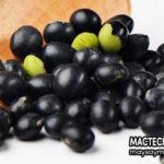 Lợi ích từ hạt đậu đen - tốt đến không ngờ