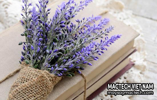 Hoa oải hương sấy khô, tác dụng và những lợi ích không ngờ