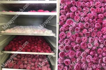 Máy sấy hoa hồng phù hợp cho quy mô sản xuất vừa và nhỏ