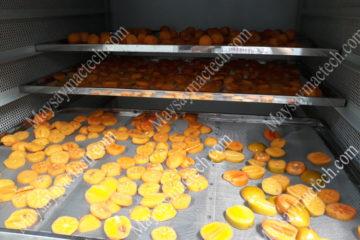 Máy sấy hoa quả lạnh được áp dụng với quy mô sản xuất nào