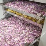 Nhiệt độ sấy hoa sen như nào là phù hợp để giữ màu đẹp