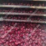 Nhiệt độ sấy hoa atiso phù hợp mang đến sản phẩm chất lượng cao
