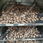 Nhiệt độ sấy chuối hột phù hợp cho chất lượng tốt, màu đẹp, khô nhanh