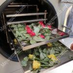 Dịch vụ sấy hoa khô, nụ hoa hồng, hoa trà vàng giữ hình dạng, màu sắc