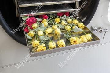 Hoa hồng sấy khô nguyên bông, nguyên hình dạng nhờ sấy thăng hoa