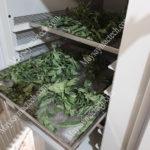 Cách sấy khô lá cây, lá dược liệu giữ nguyên màu sắc, khô giòn, làm trà túi lọc