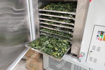 Máy sấy lạnh dược liệu mang đến ưu điểm gì cho sản phẩm