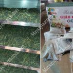Cách sấy khô giảo cổ lam giữ màu đẹp, giữ dinh dưỡng, sấy khô nhanh