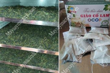 Cách sấy khô giảo cổ lam giữ màu đẹp, bảo toàn dinh dưỡng