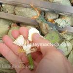 Sấy khô đài sen bằng phương pháp nào để khô giòn, giữ nguyên màu