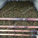 Thảo dược sấy khô bằng phương pháp sấy nào cho chất lượng tốt