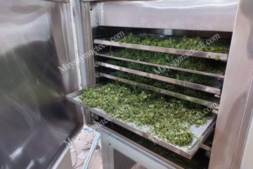 Cách sấy khô rau má, khô giòn, giữ nguyên màu xanh