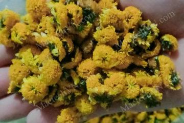 Nhiệt độ sấy hoa cúc vàng bao nhiêu là phù hợp, khô nhanh, đẹp