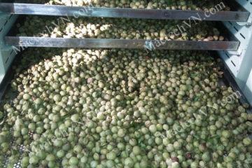 Cách sấy khô hạt mắc mật để có chất lượng tốt, nguyên hương vị